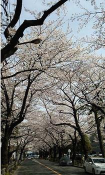 武蔵野市役所前3.jpg