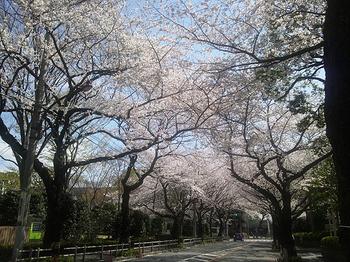 武蔵野市役所2.jpg